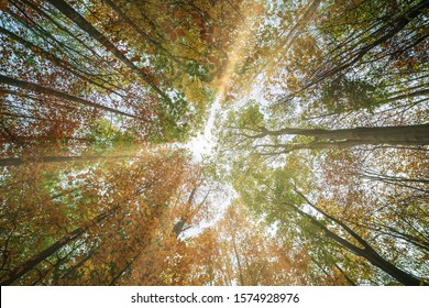 Forest bottom view of tall trees in autumn with sun rays