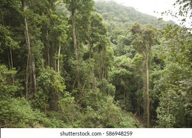 Forest in Brazil. Jungle tropical.