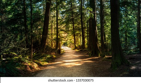 Forest in British Columbia with moody lights and colors.  A path leads through the warm summer park