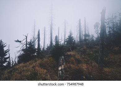 forest with broken trees
