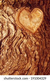 Forest brown wooden background. Texture forest wooden tree bark with sign of the heart. Love in nature