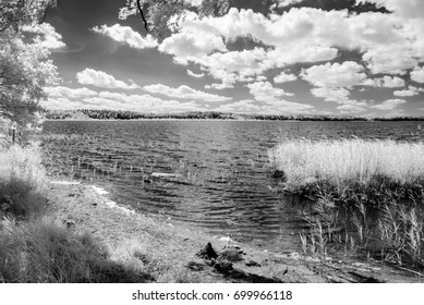 forest by the lake in hot summer day. tree leaves and reflections in water. infrared colored image monochrome