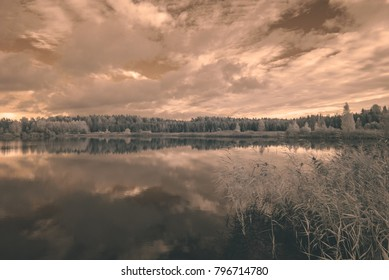 forest by the lake in hot summer day. tree leaves and reflections in water. infrared colored image - vintage film look