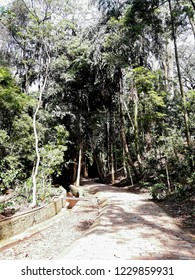 Jequitibás forest in Campinas.