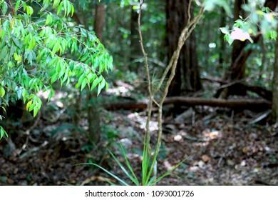 Forest in Cancun