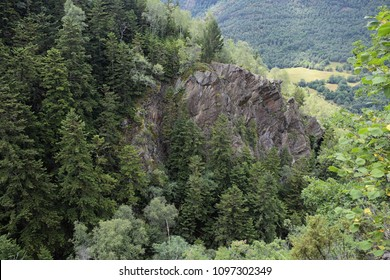 Forest in the catalan pyrenees