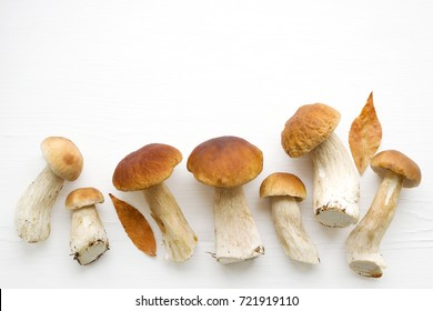 Forest cepes on a white surface of a table, close up. Autumn fresh boletus mushrooms.