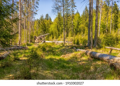 Forest clearing in the Bavarian Forest. Trees lie wild on the ground. Recorded in summer. No people. Landscape