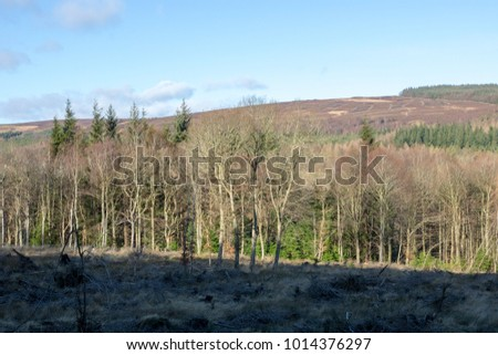 forest clearing north east