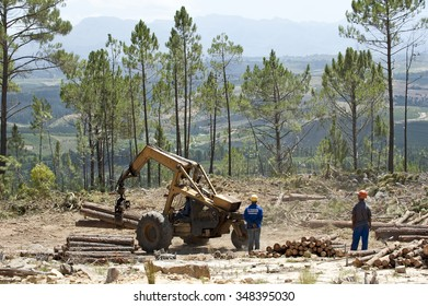 FOREST CLEARING SOUTH AFRICA  - CIRCA 2013 - Forestry workers felling Pine trees in the Western Cape region South Africa