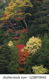 Forest of colored leaves