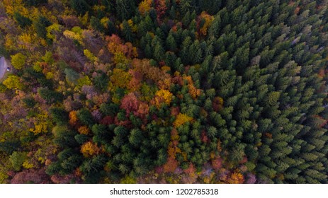 forest in colors of autumn