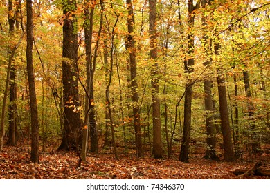 forest colors in the fall
