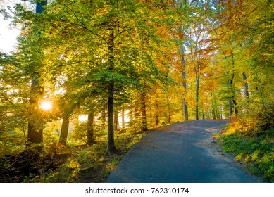 Forest colors and sun lighting the path in autumn in Lausanne