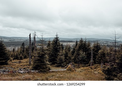 Forest countryside in the upper Harz in the case of a severe drought