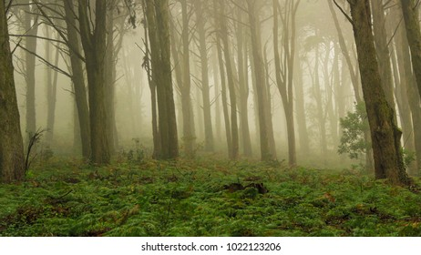 Forest covered by mist. Autumn landscape