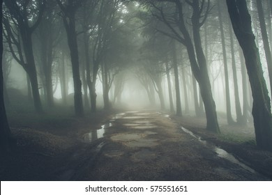 Forest covered by mist. Sintra Mountains in Portugal