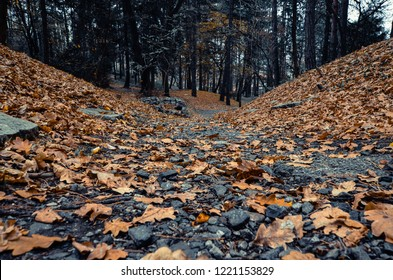 forest covered with orange leafes, trees with orange leafes in park at autumn,Gloomy atumn in the city park, the road to the forest covered with a leafes