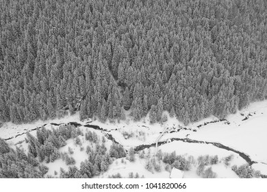 Forest covered with snow, panoramic view from drone. Winter season in the Alps
