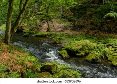 Forest creek, Bohemian Switzerland National Park, Czech Republic
