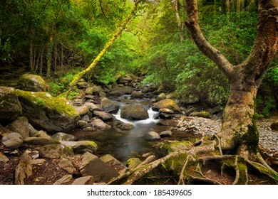 Forest and creek near Torc Waterfall, Killarney National Park, County Kerry, Ireland.