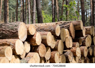 Forest cut, cut pine, birch tree logs arranged in order in cubic meter sizes. Horizontal full frame crop. Day light, sunny day