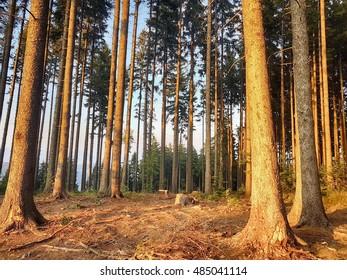Forest in Czech Republic
