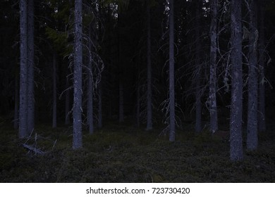 forest dark night