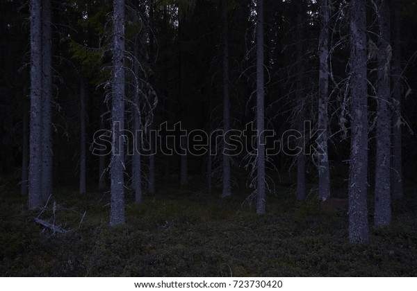 forest dark night