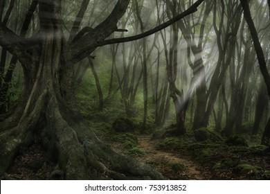 Forest in darkness