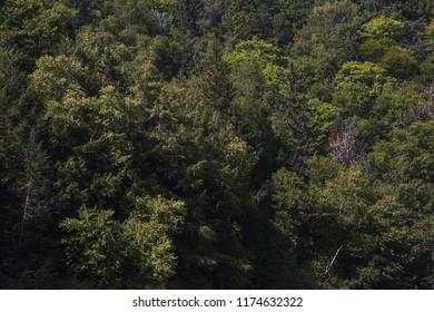 Québec forest day