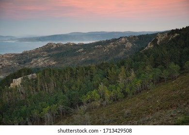Forest in the Death coast, wild part of the galician coast, Spain