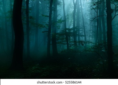 Forest of Deciduous Trees at Night Illuminated by Moonlight, Spooky Mystic Atmosphere