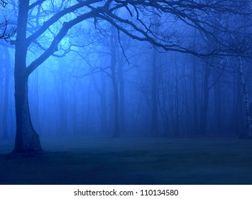 Forest in Deep Blue Fog