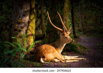 Forest deer in morning light
