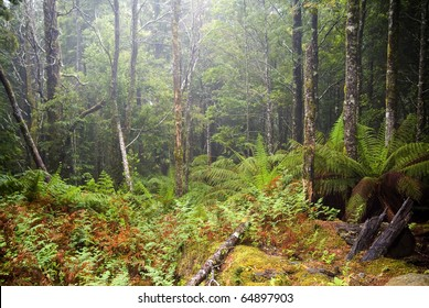 Forest details with thick undergrowth, fog and mist passing through