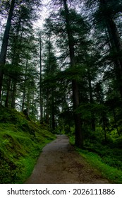 Forest of devdar tree with dark and moody tone with scenic view, Empty path. - Shutterstock ID 2026111886
