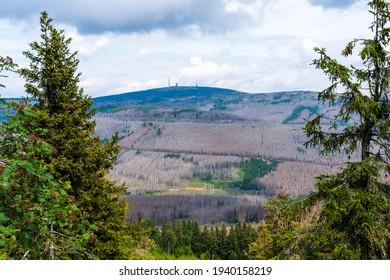 Waldsterben in Nord-Mitteldeutschland Dürre und Befall des Käfers im Sommer im Harzer Nationalpark Niedersachsen