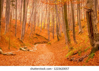 Forest during autumn in Rasnov, Romania