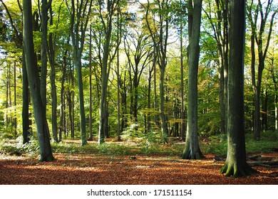 Forest during Oktober