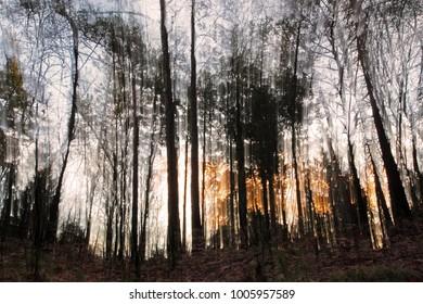 Forest Dwingelderveld in the morning light, the Netherlands