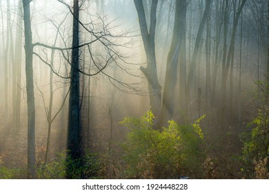 A forest in the early morning sunrays and fog.