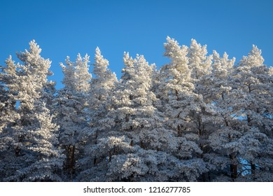 forest edge in clear winter day