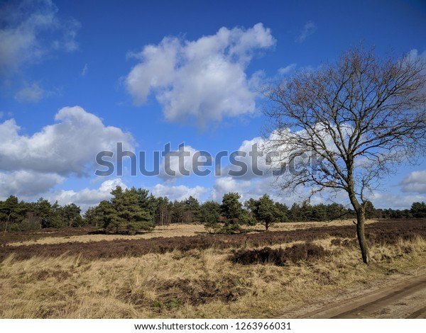 Forest edge and heath landscape in Veluwe National Park, The Netherlands. Veluwe National Park is a nature reserve of woods, heaths, grassy planes and drifting sands.