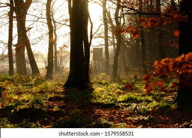 Forest edge in the morning sun