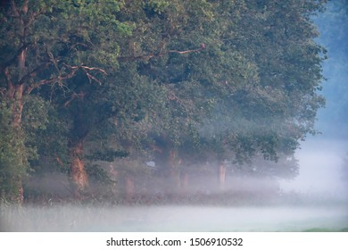 Forest edge in summer on misty morning.