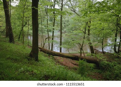 A Forest Ends at the Shore of a Creek