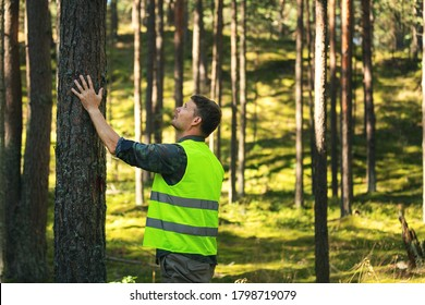 forest engineering and management, renewable resources - forester checking quality of pine tree