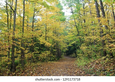 Forest at fall