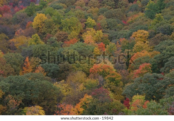 Forest in Fall Colors